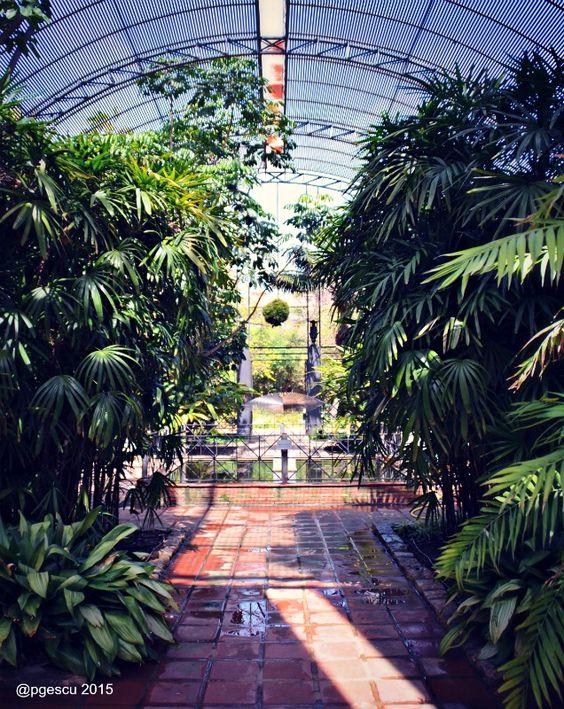 Botánico #Valencia