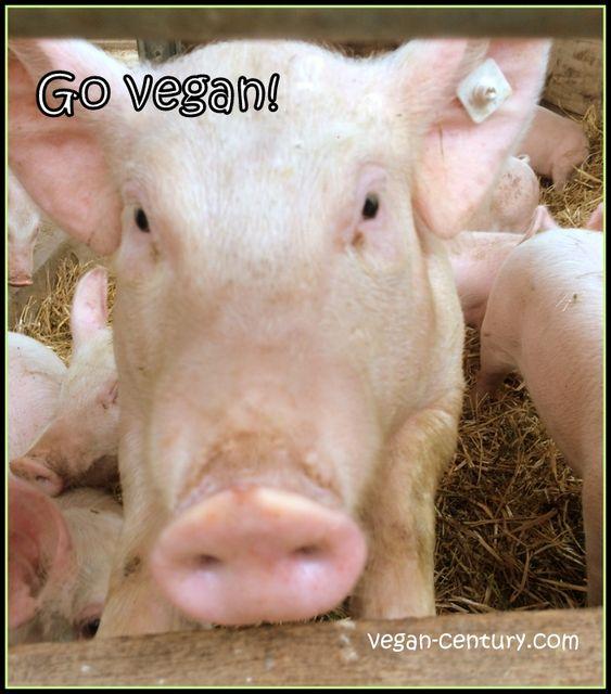 Wie werde ich Veganer?Die 10 besten Tipps!