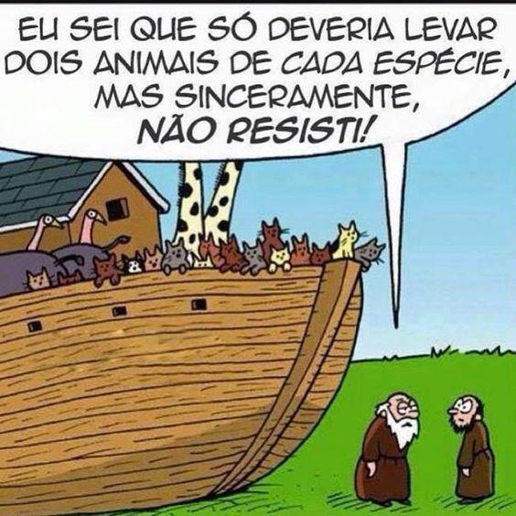 Noé gateiro!...