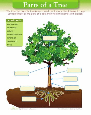 tree diagram trees worksheets and articles. Black Bedroom Furniture Sets. Home Design Ideas