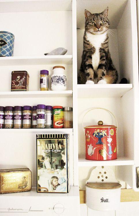 Dekoration mit Katze
