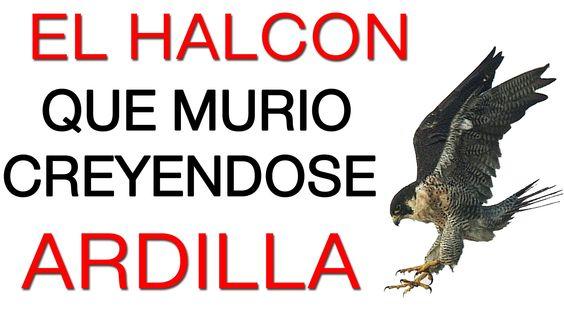 eres halcon o ardilla superate Aqui: misionfortuna.com/home-angel12