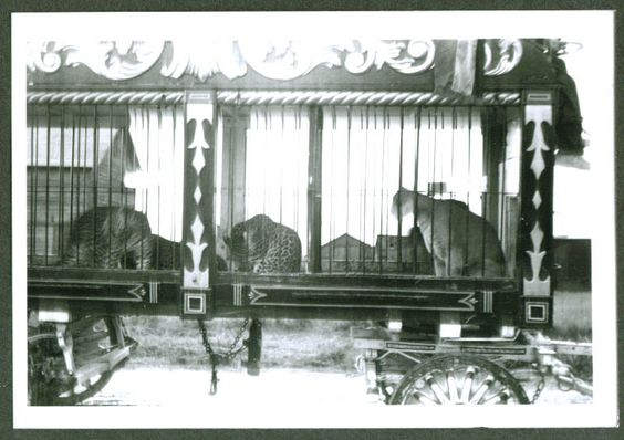 Circus Animal Cage Wagon: Leopards & Puma