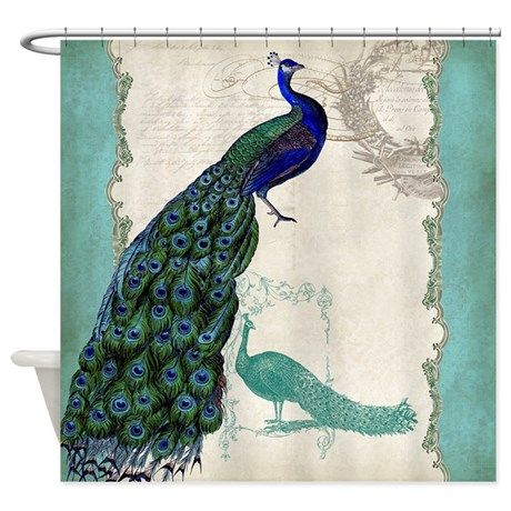 Vintage Peacock Etchings Scroll Swirl Watercolor S on CafePress.com