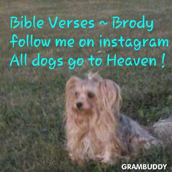 Bible Verses ~ Brody