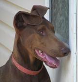 Rikki's Refuge (Life Unlimited of Virginia, Inc. Tax id 54-1911042) is a multi-species no-kill animal sanctuary located in Orange, Virginia, ...