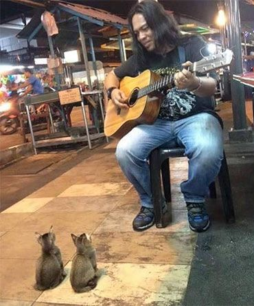 This Street Musician Was About To Call It Quits… But Then These Kittens Showed Up And Did THIS. - http://eradaily.com/street-musician-call-quits-kittens-showed/