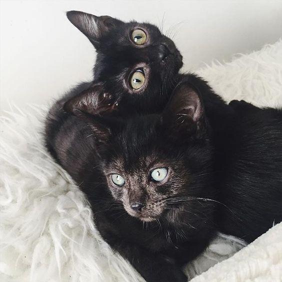 Vogue Kittens! 😻  #ImNotBadLuck #Cute #BlackCat #BlackKitty #BlackKitten #Kitteh #Familiar #Alternative #Goth #Gothic #GothLife #GothGirl #Emo #Vamp #Vampabilly