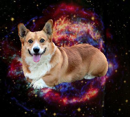 corgi in space!