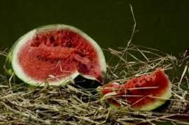 Resultado de imagem para melancia fruta