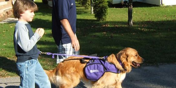 Certified Service Dogs for Autism