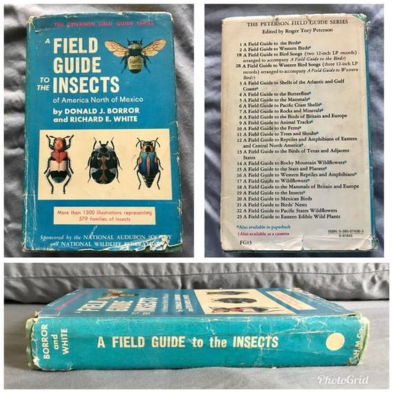 A Field Guide to the Insects of America North of Mexico