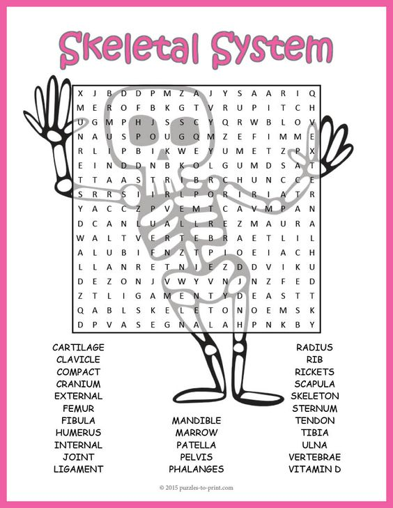 Human Skeletal System Word Search Puzzle | Increase vocabulary ...