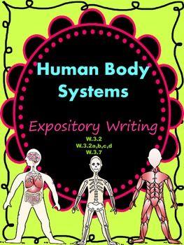 essay bodies