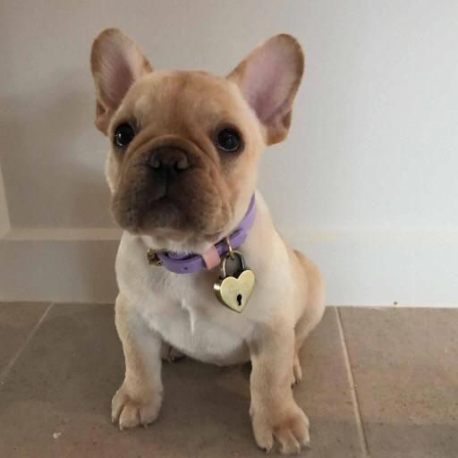 Dog Care And Training Tips Dogtraininghouston Dog Behavior