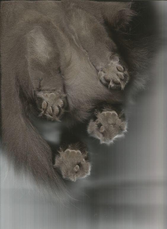 My cat, Shadow, standing on my scanner.  ha ha ha