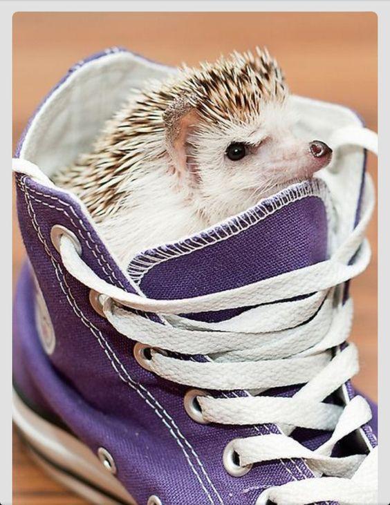 Shoe hedge hog:
