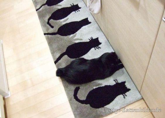 Lustige Katzenbilder und lustige Katzenfotos | lustige-katzenbilder | lustige_katzenbilder_bv195