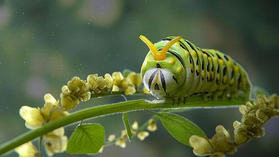 Click image for larger version.  Name:catepillar_in_flowers_by_the_epic_k-d7qpq2a.jpg Views:147 Size:228.2 KB ID:321425