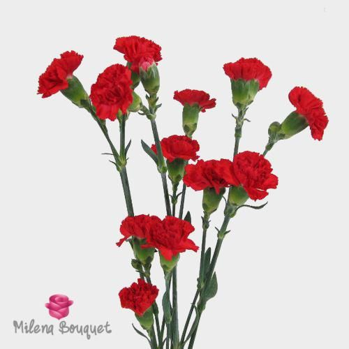 Red Mini Carnation Flowers In 2020 Mini Carnations Carnations Carnation Flower