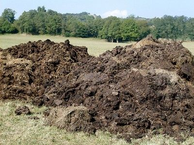 Les fumiers d'origine animale sont des amendements. Ils améliorent les qualités physico-chimiques du sol. Ces fumiers sont issus du compostage de litières animales ( vaches, moutons, chevaux, volailles…) dans lesquelles on retrouve des matières nutritives ( azote surtout) et des matières sèches (riches en carbone) ( paille, feuilles…). Quels sont les fumiers les plus répandus et comment les utiliser au jardin ? http://www.jardipartage.fr/choisir-fumure-organique/