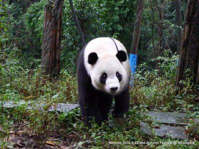 Long+Hu+Shan   Bi Feng Xia: Tai Shan, Mei Sheng & Hua Mei