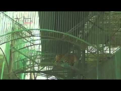 Decomisan 101 animales del zoo de diputado panista   Igualdad Animal