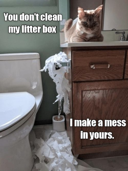 I Mess With Yours Http Cheezburger Com 9157551872 Funny Cats Cute Animal Memes Funny Cat Memes