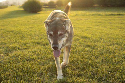 My dog Possum. Rest in peace.