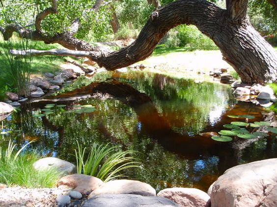 Pond by Bosque Natural