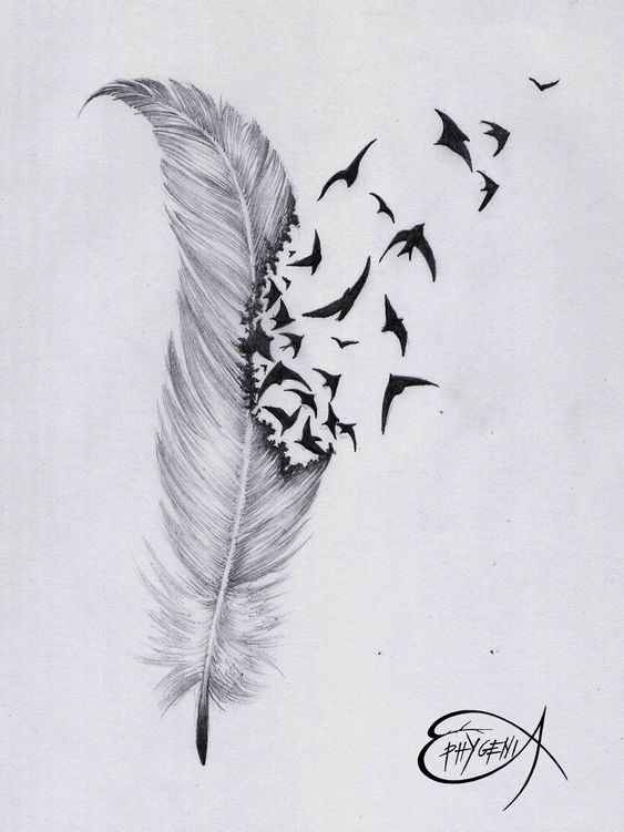 Gallery For gt Feather And Bird Drawing Tumblr