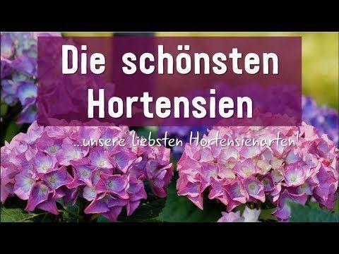 Hortensiensorten Die 6 Schonsten Hortensien Arten Garten Arten Die Garten Hortensien Hortensienarten Hortensiensorten Orchideenpflegen Camping Hacks