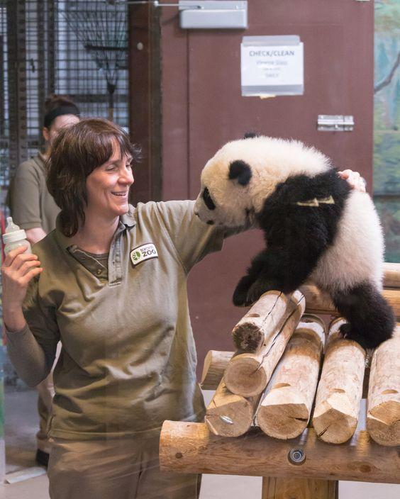 Panda Cub Feeding Time.jpg - null