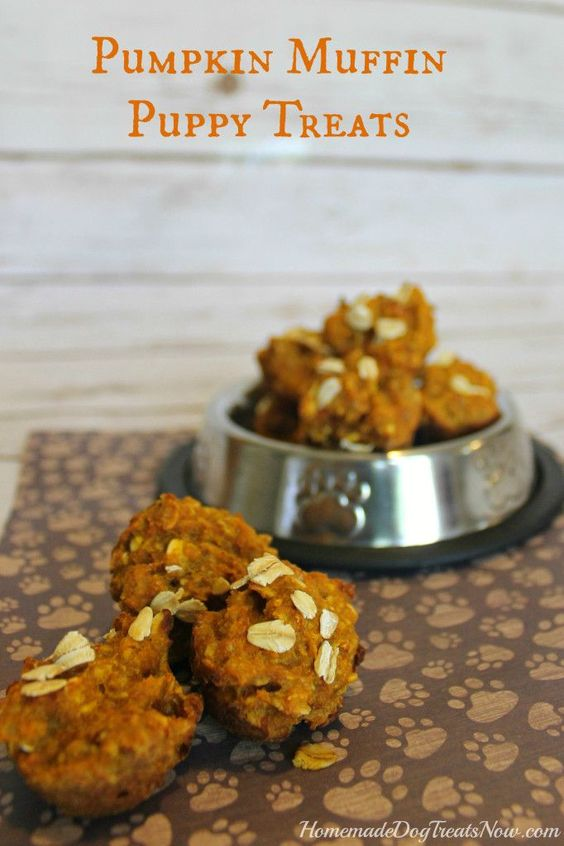 Pumpkin Puppy Muffins! The perfect homemade dog treat ...