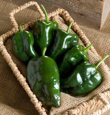 Amazon.com: Pepper Tiburon, Capsicum annuum 25 Hybrid Seeds per Packet by David's Garden Seeds: Patio, Lawn & Garden