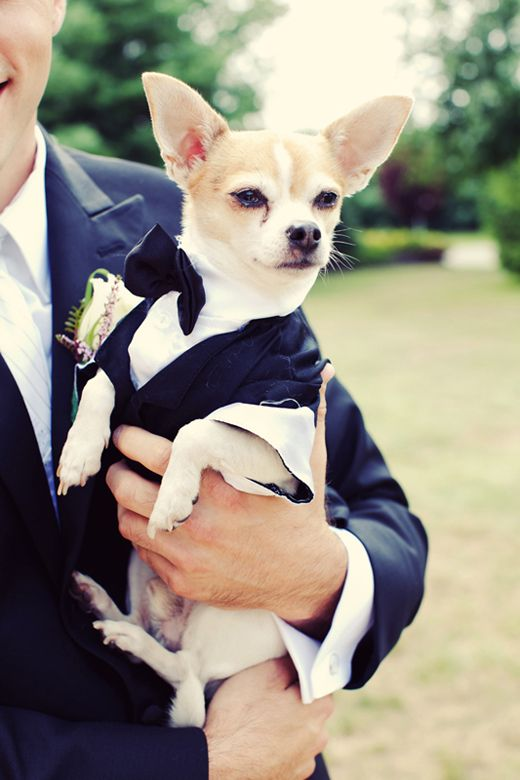How fun would it be to have your pet at your wedding?  | @Jenelle Isaacson Isaacson Kappe #wedding #pets