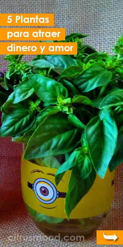 5 Plantas Para Atraer Dinero Y Amor Plantas Atraer Amor Dinero Hogar Casa Interior Curiosidad Flower Garden Herbs Feng Shui
