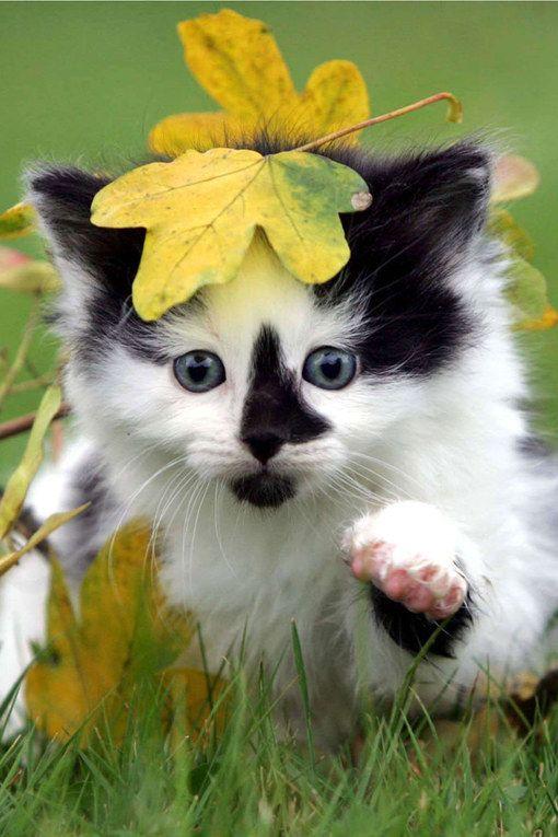 Photos d'animaux : un chaton