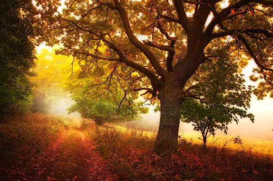 Meditace-podzimu