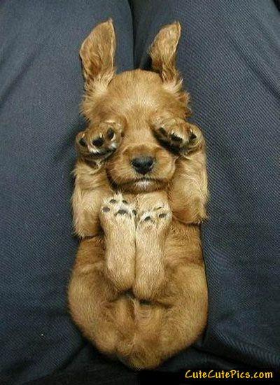 adorable: