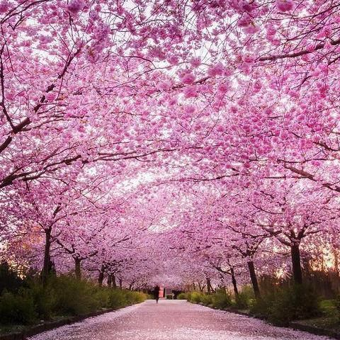 Everything You Love About Springin A Bottle Cherry Blossom Perfume Is An Upbeat Floral Fragrance Makes Your World Sweeter S Nature Beautiful Nature Landscape