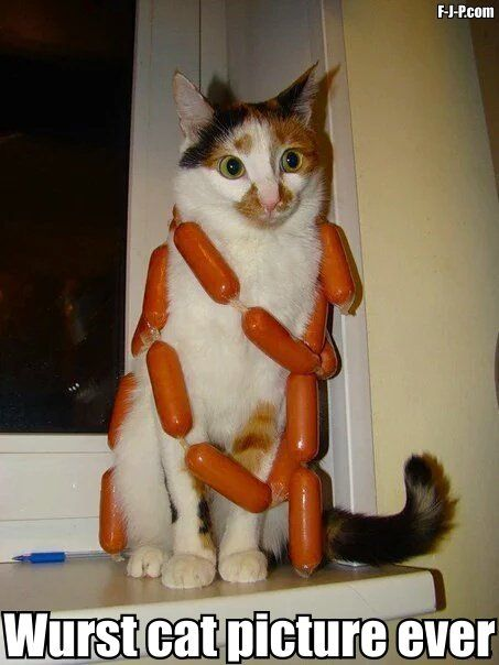 Funny Wurst Cat Picture Ever Pun Joke