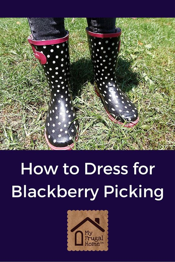 How to Dress for Blackberry Picking -- Here's how to protect yourself from chiggers, ticks. poison ivy and briars.