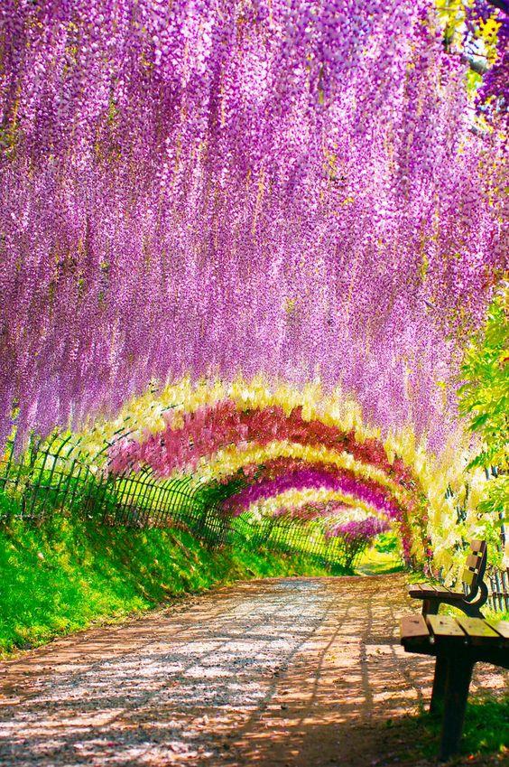 Wisteria Tunnel, Kawachi Fuji Gardens, Kitakyushu, Japan