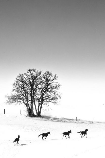 Horses by Яick Harris: