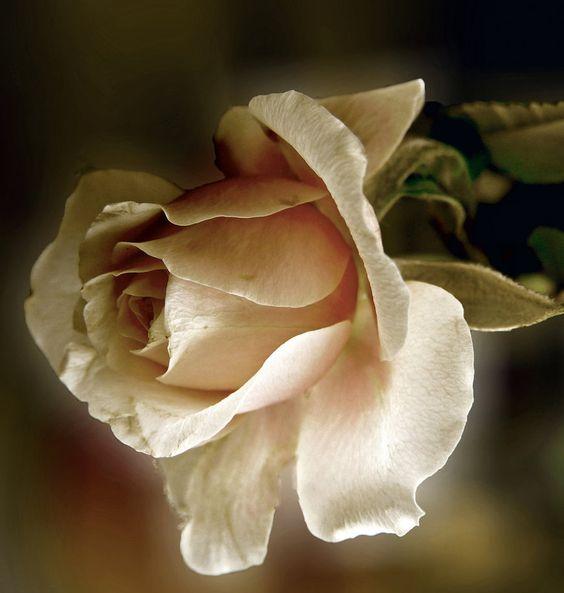 rose girl - Pesquisa Google