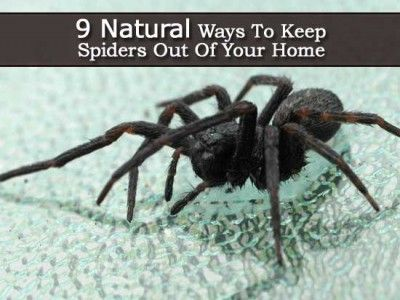 9 natural ways to keep spiders out of your home plant for How to keep spiders out of your house