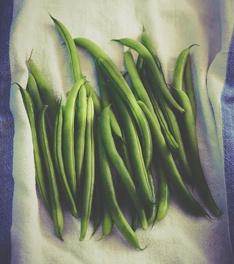 One of the healthiest and easiest vegetables for backyard gardening, green beans are becoming more and more popular among beginner gardeners. They're quite easy to grow so newbies won't have a difficult time planting them at home.  To help you get started, simply read these 10 awesome tips at http://homeandgardenamerica.com/green-bean-gardening-tips