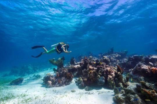 Turks Caicos Diving Amazingscubadivingtraining Scuba Diving Diving Diving School