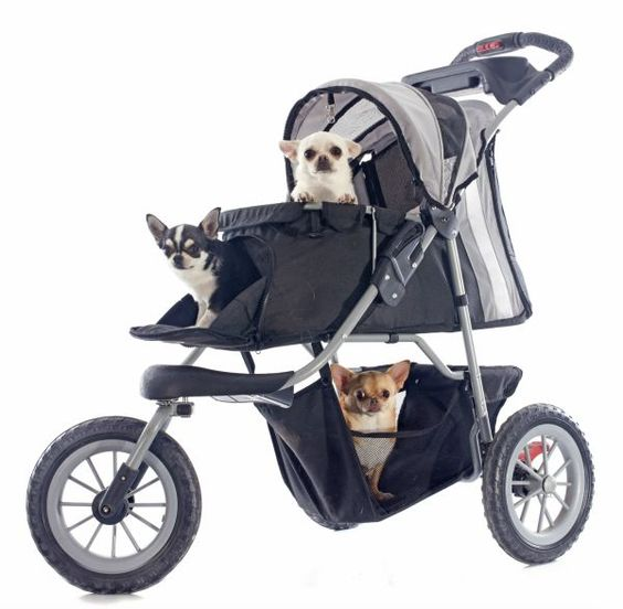 Transporte canino...